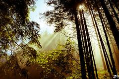 Atmosphere of rain (Riccardo Brig Casarico) Tags: italy sun mountains rain alberi wow photography photo reflex nikon europa europe italia ray colours fotografia nikkor colori pioggia montagna atmosfera brig 18105 riki atmosphre d5100 brigrc