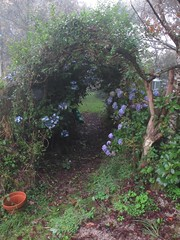 garden arch (squeezemonkey) Tags: flowers fog garden cornwall arch path hydrangea