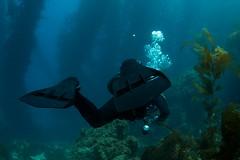 Catalina Aug 2011 6 (decidedlyodd) Tags: california justin island underwater scuba diving avalon santacatalina casinopark