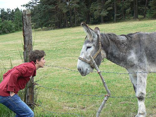 deux ânes.jpg