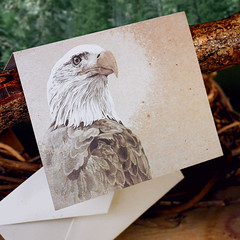 Bald Eagle (snailspacepaper) Tags: patriotic environment wildlifecards naturecards recycledcards