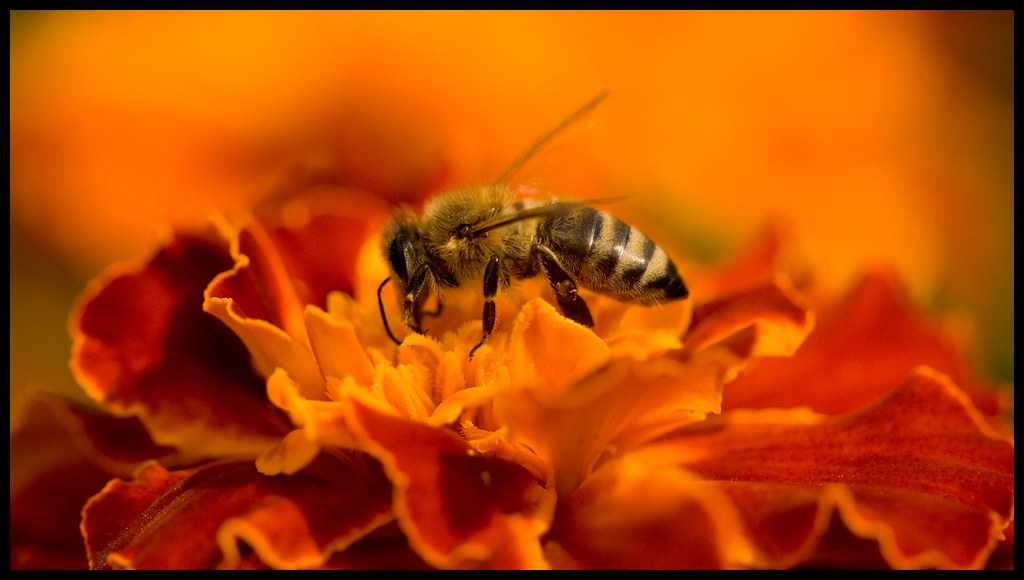 Another Bee or two