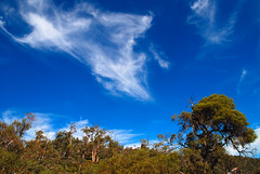 By Gum That's a Beautifully Blue Sky! (antonychammond) Tags: blue trees sky australia victoria newsouthwales thredbo snowymountains potofgold kosciuszkonationalpark gumtrees thatsclassy