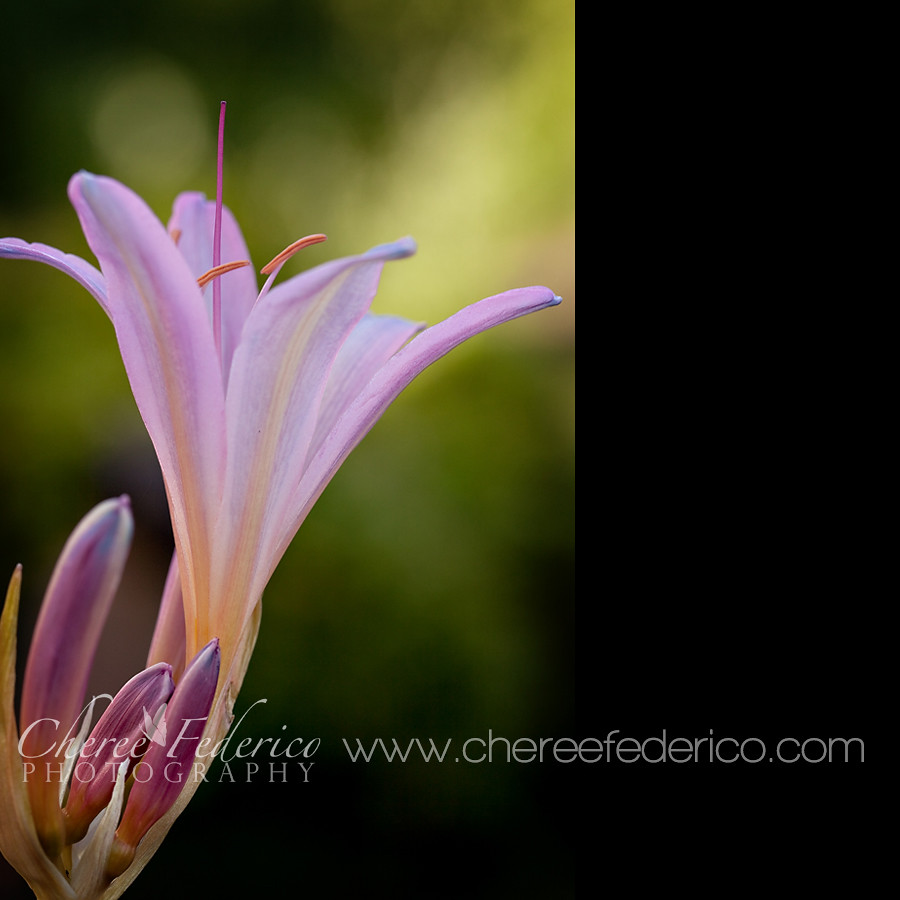 Lily Blog