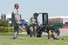 Air Force Security K9 Sitting Around (rocketdogphoto) Tags: california usa dog soldier canine usaf fairfield k9 securityforces unitedstatesairforce solanocounty travisairforcebase travisairpowerexpo