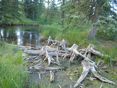 Pond Critters (Mr. Happy Face - Peace :)) Tags: canada mountains nature landscapes lakes driftwood alberta rivers views streams oceans ponds art2016