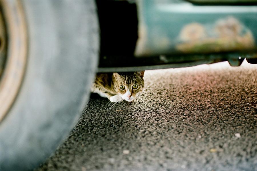 kinsale_kitty