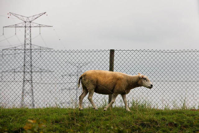 Als er één schaap over de dam is…