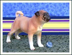 Lefton Pug (dog.happy.art) Tags: china dog vintage ceramic antique pug collection collectible figurine porcelain collecting lefton