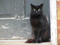 Cat in the Doorway--Little Tyke (David Hoffman '41) Tags: cat animal mammal nature feline black peeling paint door frame congenial sociable concrete brick cartersville cumberlandcounty virginia platinumheartaward littletyke doorway