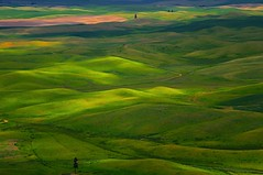 Shades of Green (Phil's Pixels) Tags: green washington wheat explore grains gettyimages palouse easternwashington steptoebutte
