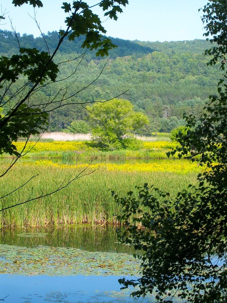 Vermont Wetlands
