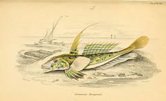 Anglų lietuvių žodynas. Žodis family callionymidae reiškia šeimos callionymidae lietuviškai.