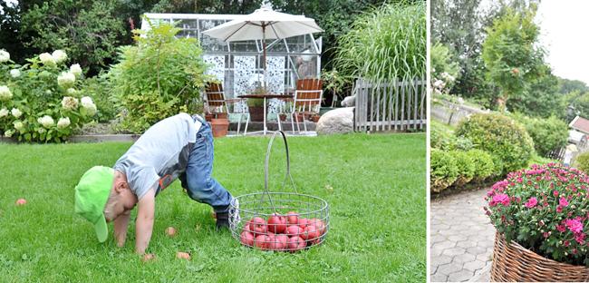 nilse plockar äpplen