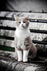 Douchka, M'chicha, Mounette, Pina et les autres (jacques pasqueille) Tags: cat kat chat gato katze 猫 gatto kot gat 貓 mèo кошка قط catmoments unamourdechat קאַץ