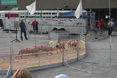 pig racing!!!