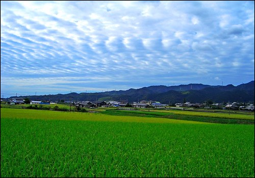 Landscape (Around the my house) by T.takako