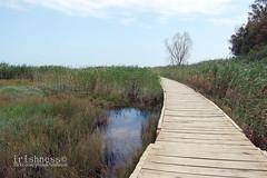 dove non basta il mare (Federica Éirinn) Tags: italy reeds italia path sicily sentiero sicilia vendicari pontile canneto