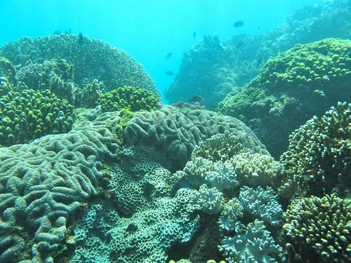 基翬水下生態。(圖片來源:中研院珊瑚礁演化生態暨遺傳實驗室)