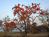 Boronti (Weekend Destinations) Tags: baranti muradilake panchkothill biharinathhill