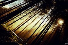 Speranza (Riccardo Brig Casarico) Tags: italy wow photography photo reflex nikon europa europe italia fotografia nikkor montagna luce paesaggio brig 18105 riki boschi d5100 brigrc