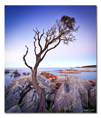 Binalong Bay Tree (iii), Tasmania, Australia (Matthew Stewart | Photographer) Tags: ocean blue trees light sunset shadow red sea sky white reflection tree green beach water leaves yellow rock point landscape bay sand rocks matthew earth australia stewart tasmania binalong 15sep112