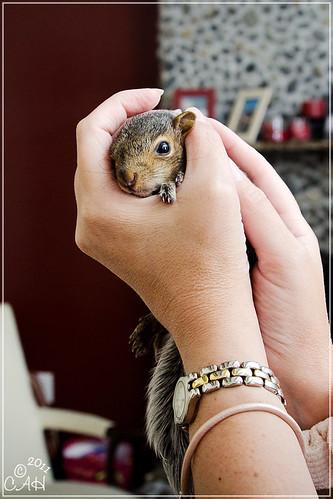 Baby Squirrels 9-3-11 10