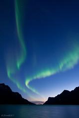 Northern Lights in Ersfjord (Explored) (B_Olsen) Tags: norway northernlights auroraborealis troms nordlys ersfjord 2011 polarlicht explored nikond90 tokinaaf1116mmf28 tokina1116proatx ginordicjan12