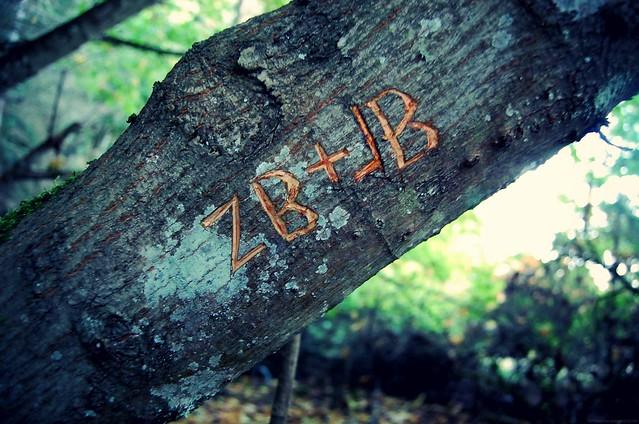 zb+jb.