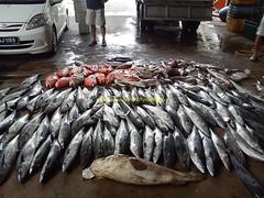 201107318 (fymac@live.com) Tags: mackerel fishing redsnapper shimano pancing angling daiwa tenggiri sarawaktourism sarawakfishing malaysiafishing borneotour malaysiaangling jiggingmaster