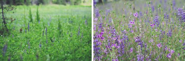 wildflowersdip