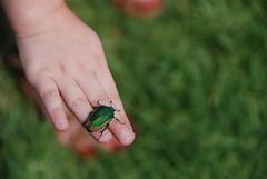 Emerald (Archer's Eye) Tags: green love home grass hawaii sweet fingers insects archer littlegirls littlehands archerseye archerkelly