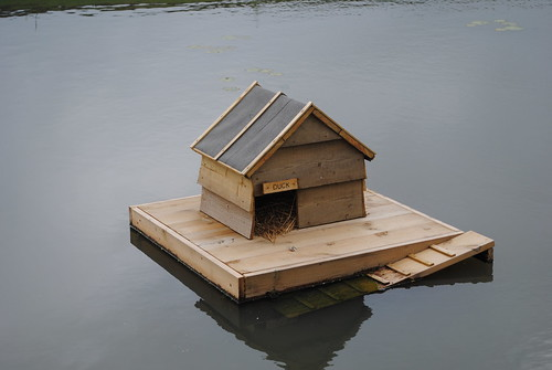 A home for ducks