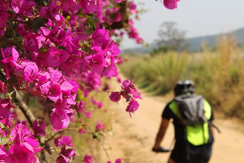 Mais uma pro Bikes & Flowers