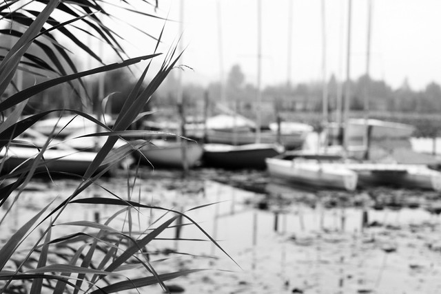 lago di fimon2