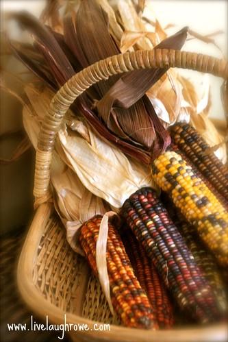 Indian Corn_Fall Decor