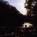 夕方の木漏れ日