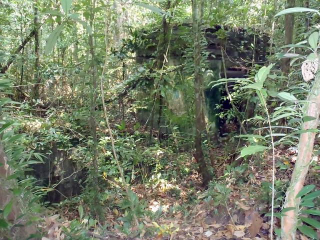 MacRitchie Reservoir   Syonan Jinja