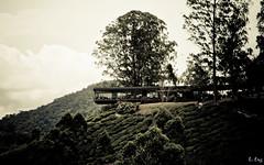 Boh Tea Centre (zelot :: Lester) Tags: cameron cameronhighlands bohteacentre malaysiacanoneosroadtrips