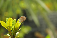 small butterfly (e.nhan) Tags: life light green art nature leaves closeup butterfly leaf dof bokeh butterflies backlighting enhan