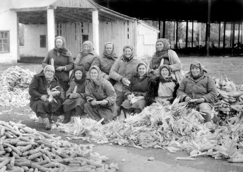 Pensioners helping with corn harvest, 1988. Photo courtesy of the State Archives of Kharkiv region.