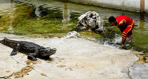 Crocodile Farm :: Splashing water