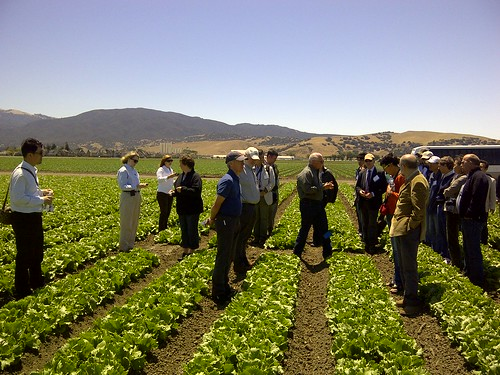 U.S. officials and members of the International Union for the Protection of New Varieties of Plants observe lettuce trials in California's Salinas Valley.