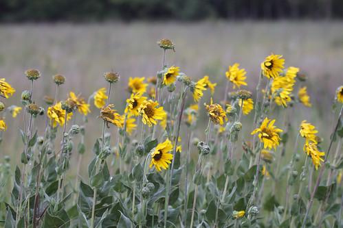 Wildflowers at Deer Run