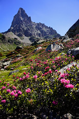 "2011_616079 - Jardin du Pic du Midi • <a style=""font-size:0.8em;"" href=""http://www.flickr.com/photos/84668659@N00/6058130401/"" target=""_blank"">View on Flickr</a>"