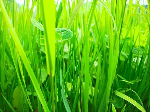 Grass Closeup by Danalynn C