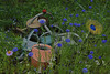 sculptillonnage (ben oït) Tags: wateringcan wateringpot arrosoir chaumontsurloire festivalinternationaldesjardins festivalinternationaldesjardinsdechaumontsurloire sculptillonnage