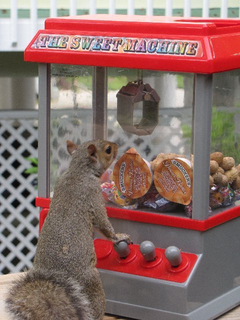 The Teenage Squirrel