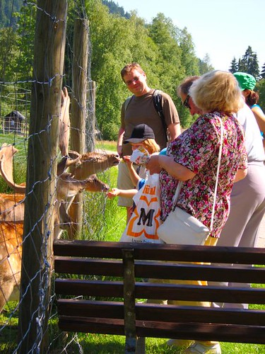 family feeding deer by Danalynn C