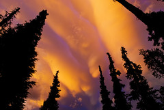 Roll On (markofphotography) Tags: camping sunset camp cloud tree silhouette craterlake rolling campsite westernhemlock lodgepolepine mammatus craterlakenationalpark mammatuscloud markcullen markofphotography mammatocumuluscloud shastafir